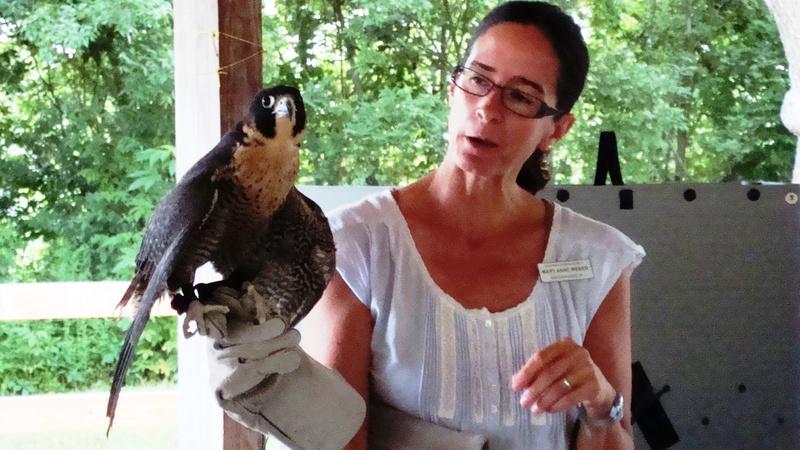 Homeschool Field Trips | Learning About Birds | Tina's Dynamic Homeschool Plus